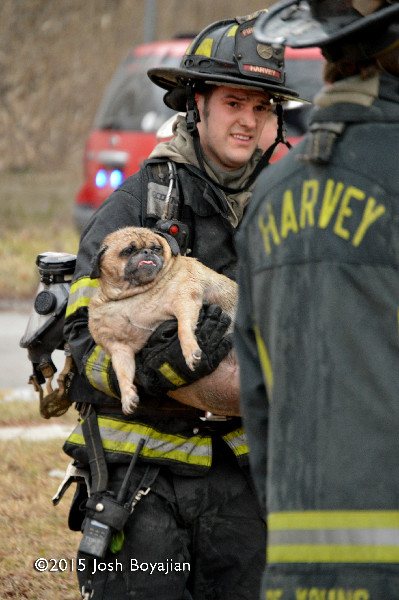 fireman saves dog