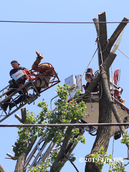accident leaves tree worker upside down with fractured leg